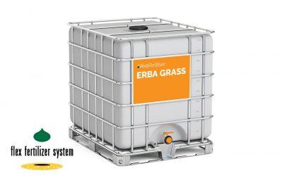 Erba Grass