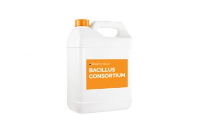 Bacillus Consortium